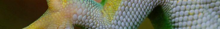 Suelas antideslizantes basadas en las patas del gecko