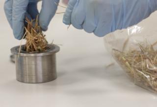 Convertir la paja de arroz en energía limpia será posible con el proyecto RICE2RICE